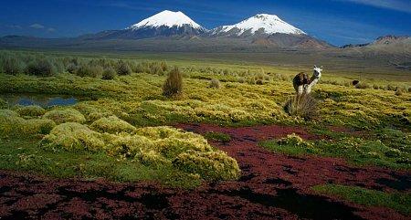 Kattints a képre a nagyításhoz  Cím:  Sajama Nemzeti Park - Parinacota és Pomerape.jpg Megnézték: 1766 Méret:  80,0 KB Azonosító:  450