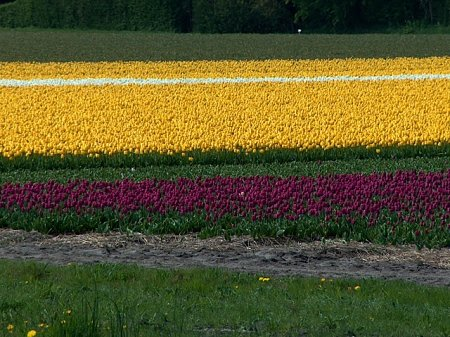 Kattints a képre a nagyításhoz  Cím:  hollandia201005043.JPG Megnézték: 671 Méret:  153,2 KB Azonosító:  500