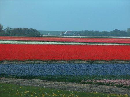 Kattints a képre a nagyításhoz  Cím:  hollandia201005047.JPG Megnézték: 1115 Méret:  79,3 KB Azonosító:  501