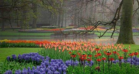 Kattints a képre a nagyításhoz  Cím:  Keukenhof - Lisse - Tulipánkert.jpg Megnézték: 3487 Méret:  80,6 KB Azonosító:  894