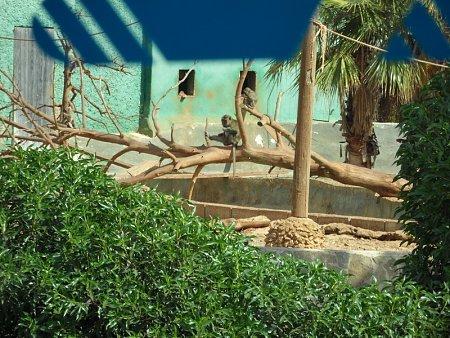 Kattints a képre a nagyításhoz  Cím:  safari park.JPG Megnézték: 581 Méret:  292,9 KB Azonosító:  989