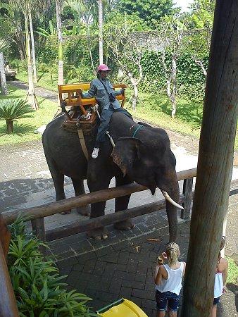 indonezia-bali-zoo-46-.jpg.jpg Megnézték: 604 Méret:  1,01 MB Azonosító:  1126