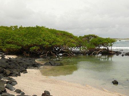 ecuador-es-galapagos-szigetek-tn_1galapagosi-taj-2.jpg