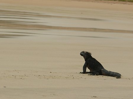 ecuador-es-galapagos-szigetek-tn_1napozo-tarajos-suel.jpg