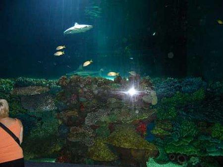 nyiregyhazi-vadaspark-akvarium.jpg