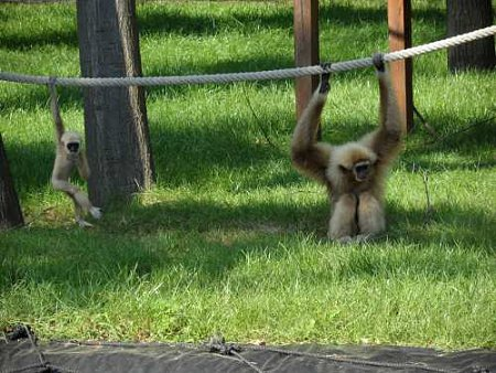 nyiregyhazi-vadaspark-majombebi.jpg