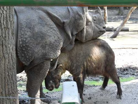 nyiregyhazi-vadaspark-rhino.jpg
