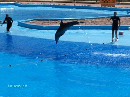 tunezia-tn_1tunezia-2011-186.jpg