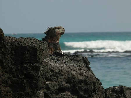 ecuador-es-galapagos-szigetek-tn_1merengo-leguan.jpg
