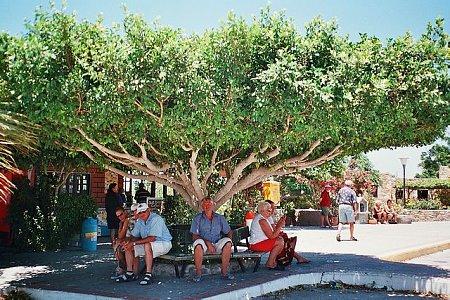 kos-sziget-tn_1photo17_17.jpg